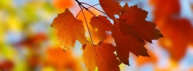 facebook sonbahar kapak resimleri+%25281%2529 Facebook Zaman Tüneli Sonbahar Manzara Kapak Resimleri