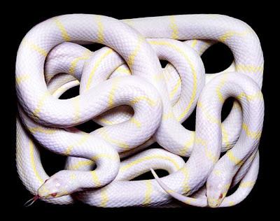 ular-paling-mematikan-di-dunia