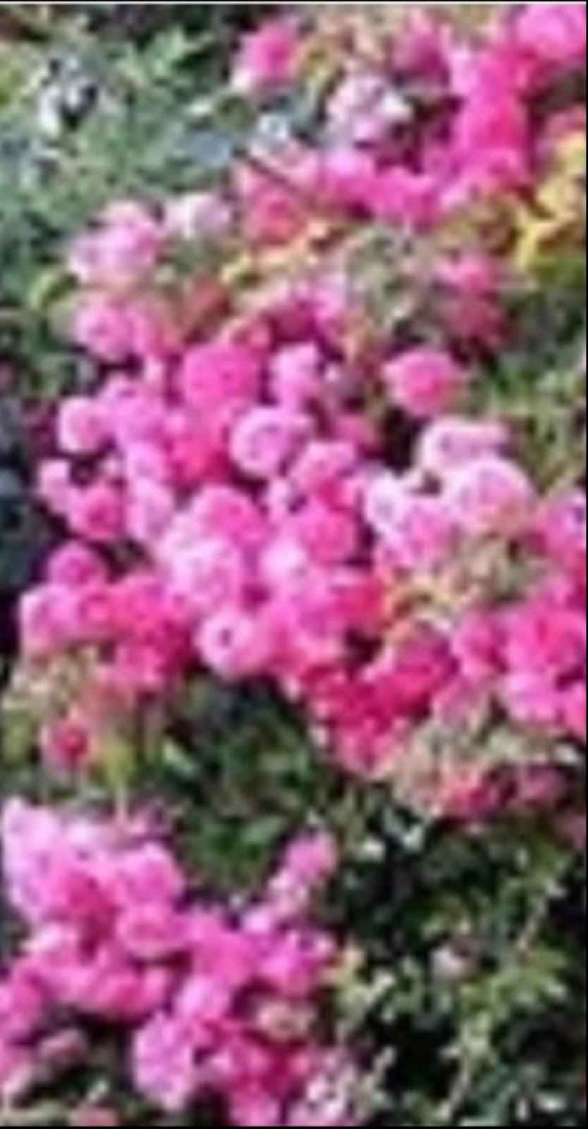 Experimentan con plantas y desechos agrícolas anticancerígenos