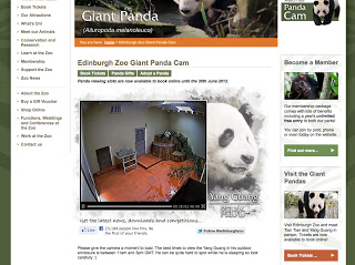 Edinburgh Zoo Panda Webcam