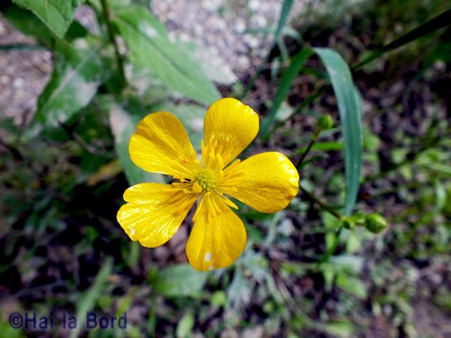 floare galbena judet covasna
