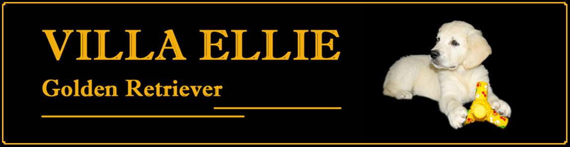 Golden Retriever Villa Ellie