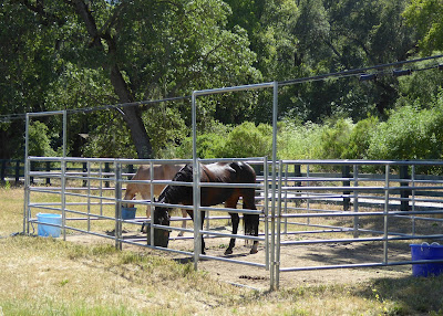 horses at Joseph D Grant equestrian campground