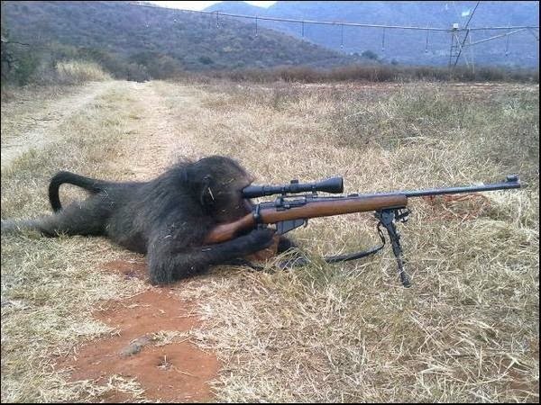 Monyet belajar nembak