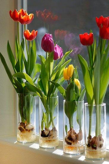 Como flores son las ilusiones.