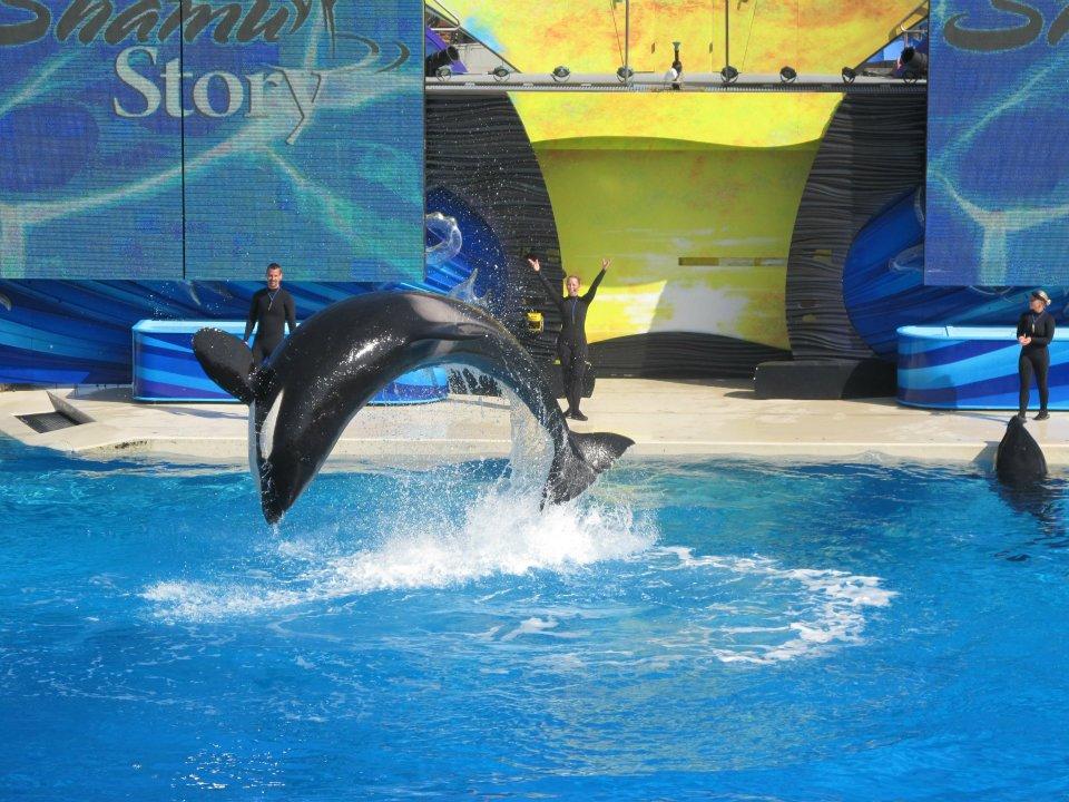 SeaWorld San Diego Shamu Story