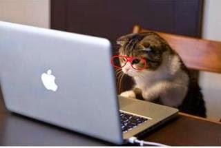 http://www.slate.fr/life/87913/gens-aiment-chats-plus-intelligents-ceux-qui-aiment-chiens