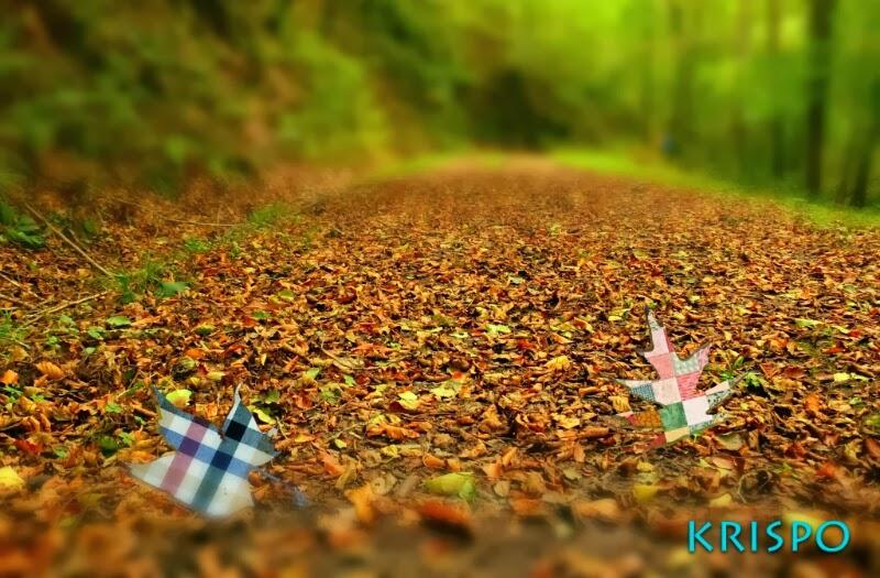 fotomontaje de dos hojas a cuadros encima de camino lleno de hojas