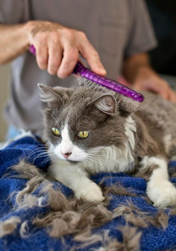 Прежде, чем ответить на вопрос, почему у кошки лезет шерсть, внимательно присмотритесь к своему питомцу