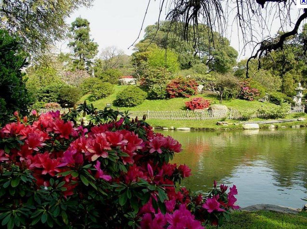 El Espiritu De Las Plantas La Belleza De Los Parques