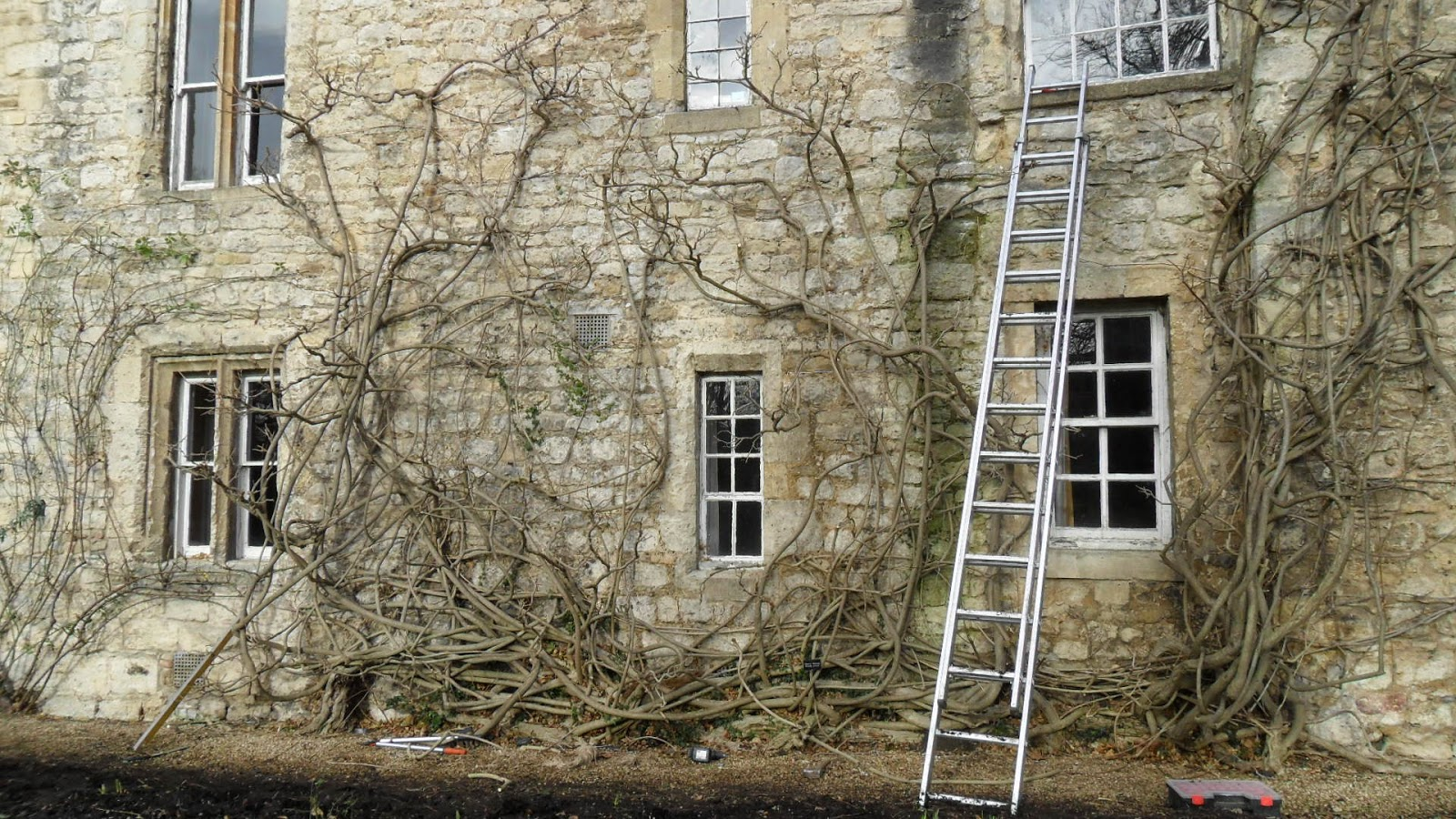 Worcester College Gardeners A Week Working On Wisteria