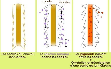 b principe dune coloration directe - Coloration D Oxydation