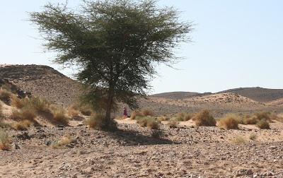 nomadas, desierto, marruecos, viajes a marruecos, kasbah,bereber,