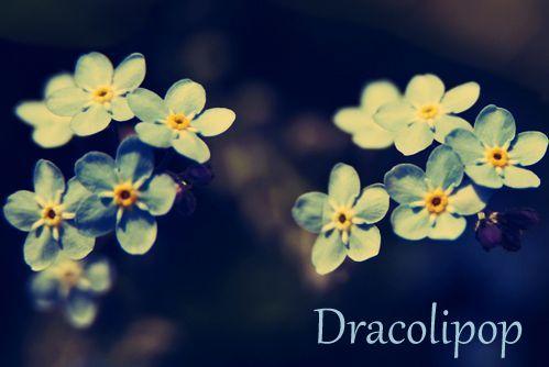 Dracolipop