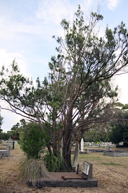 Image of an old grave on which a tree is growing - cemetery photography