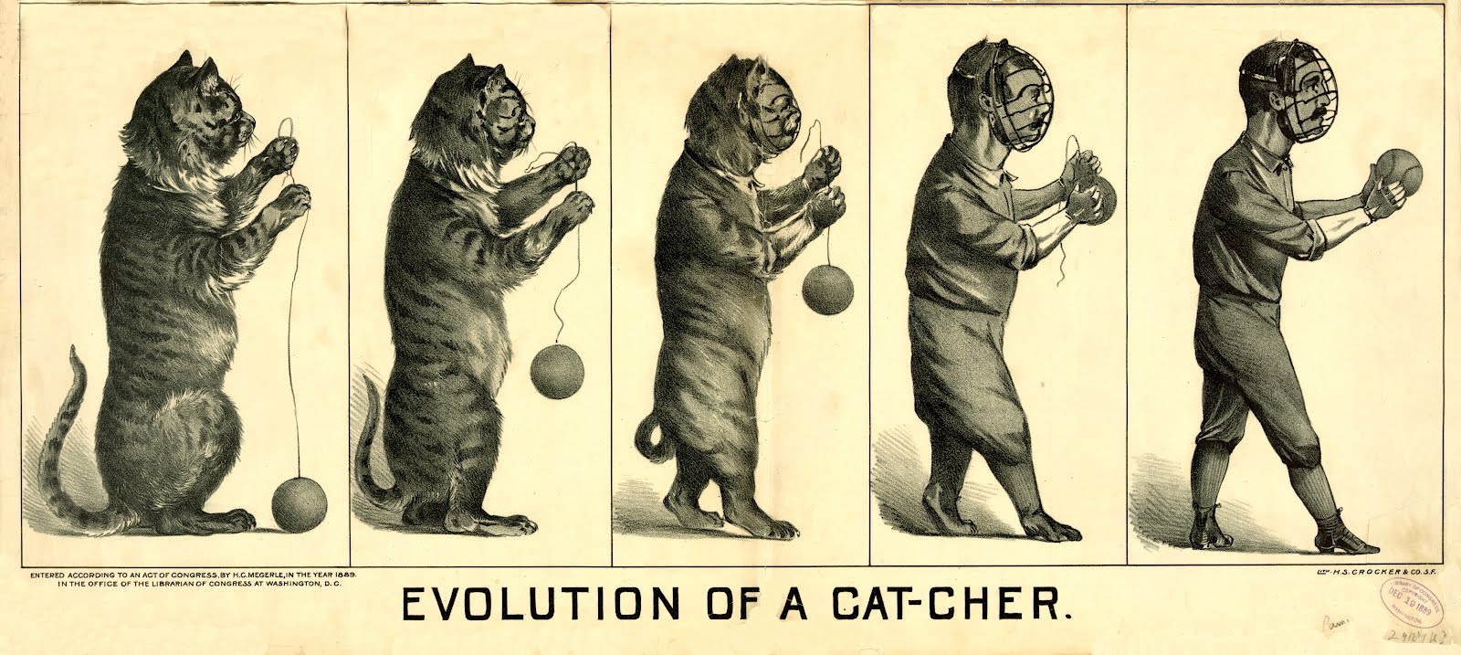 Evolution cat to catcher