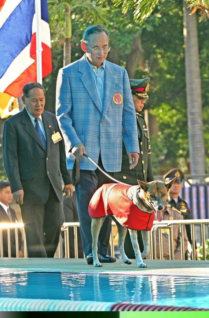 dog-674x1024.jpg