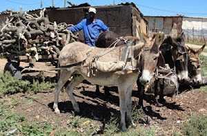 Local Donkey Cart People