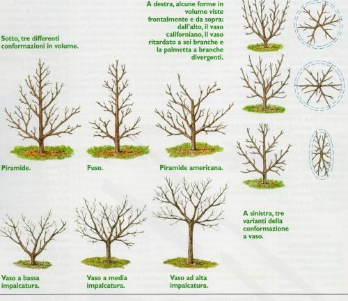 Piante e Fiori: Alberi e piante da frutto. Come sceglierle