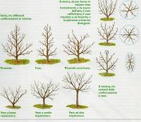 Piante e fiori alberi e piante da frutto come sceglierle for Potatura alberi da frutto