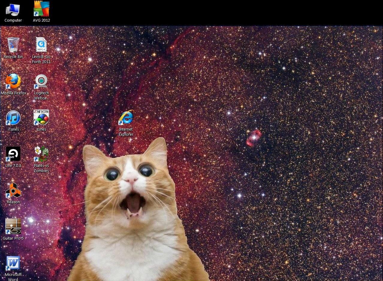 kitten afraid of internet explorer