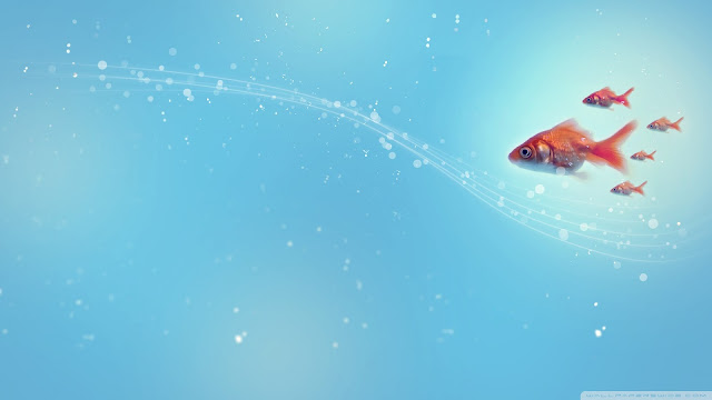Best Jungle Life goldfish, hq wallpapers