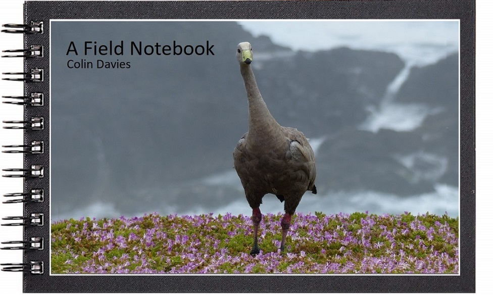 A Field Notebook