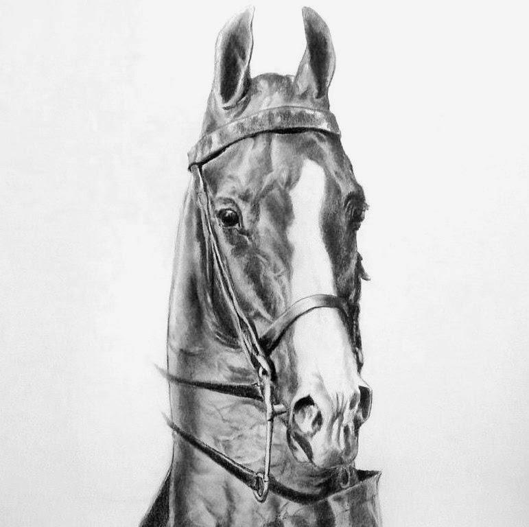 caballos-dibujos