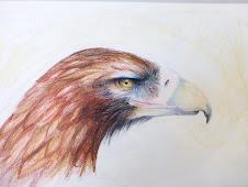 Pràctica de dibuix a llapis de color