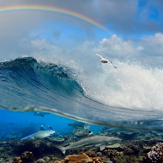 An ocean story
