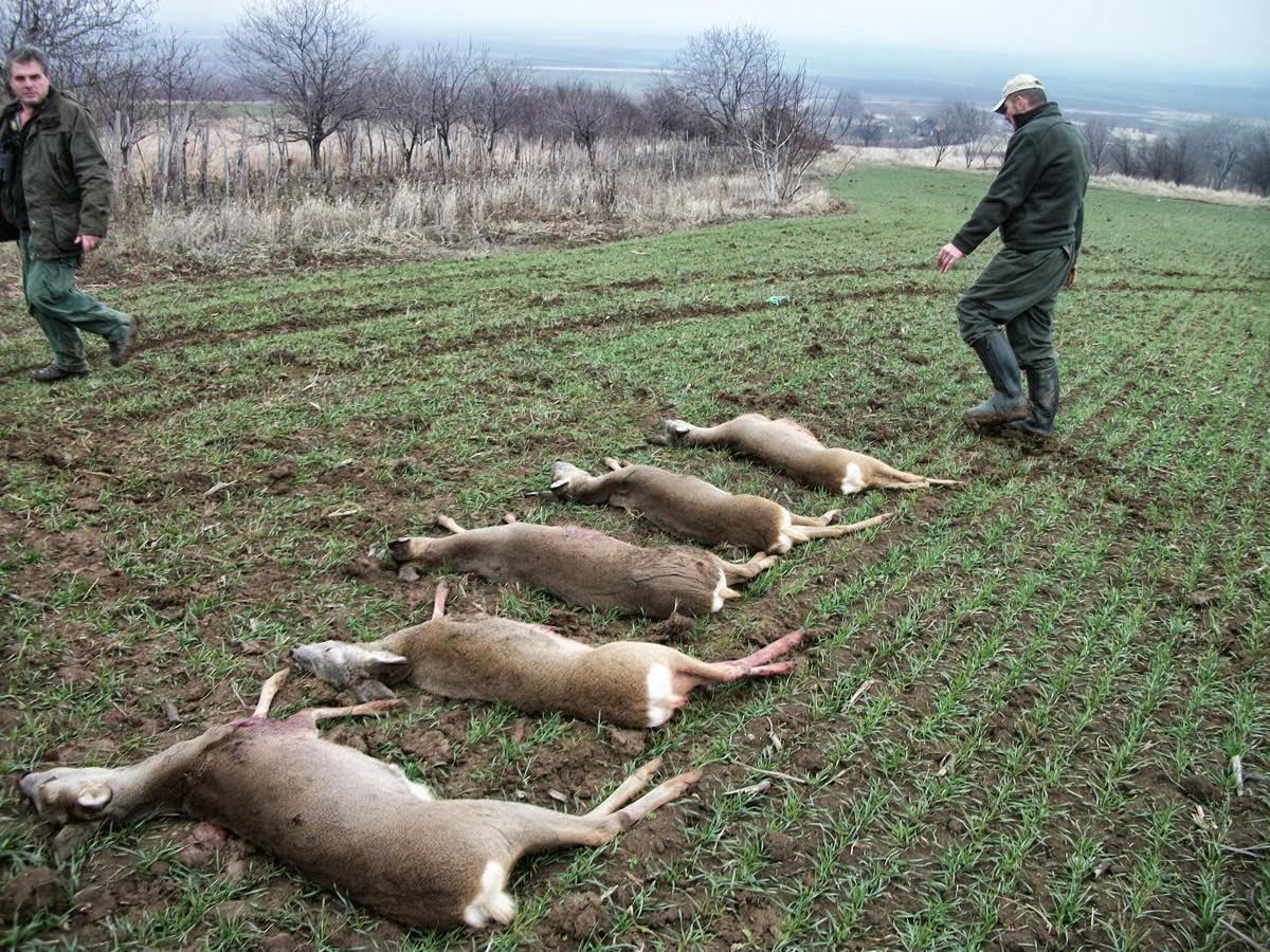 Aereo Da Caccia Piu Forte Del Mondo : Noixlucoli onlus troppi cervi e caprioli la regione