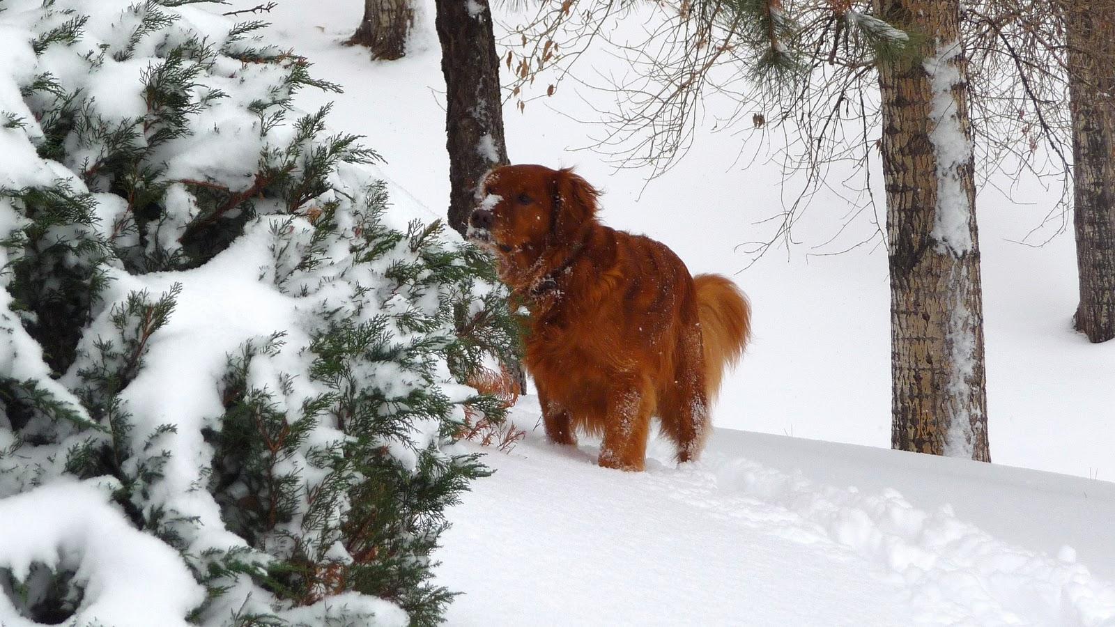 While Walking Duncan: December 2011