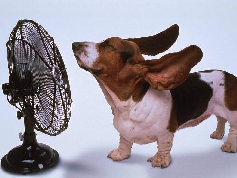Cachorro com calor; ventilador