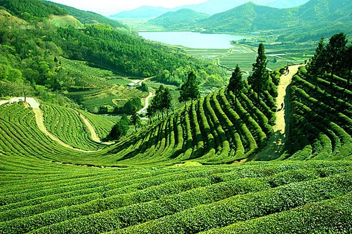 Darjeeling- One of the best hill stations in the state of West Bengal, India.