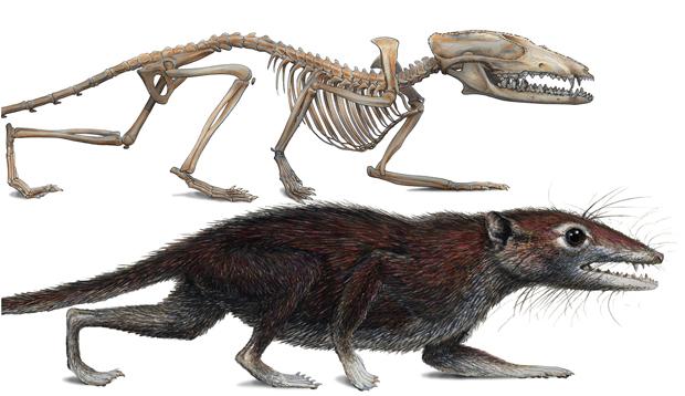 http://2.bp.blogspot.com/-2J8ZLVZZNVw/T48cuk-nLzI/AAAAAAAAAFs/YB5xnv12Lvg/s1600/fossil+placenta+de+mamifero+2.jpg