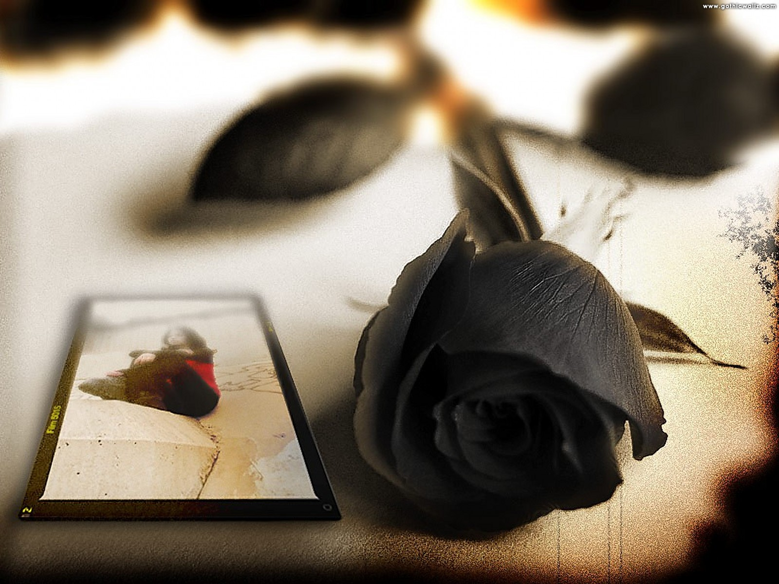 Black Rose Postcard | Dark Gothic Wallpaper Download