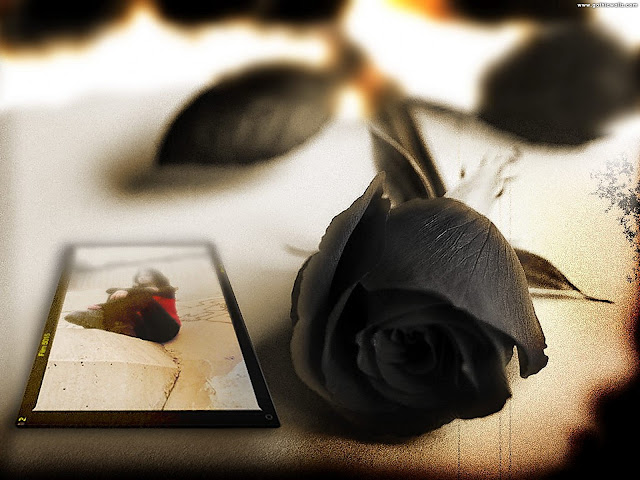 Black Rose Postcard dark gothic wallpaper