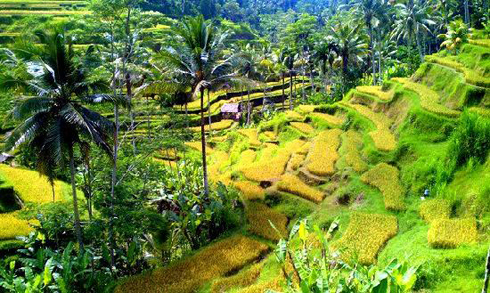 Infinity Mountainbiking - Day Tours Bali Scenery