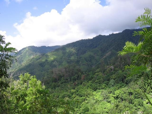 bonsai forest, Mount Hamiguitan, Davao Oriental