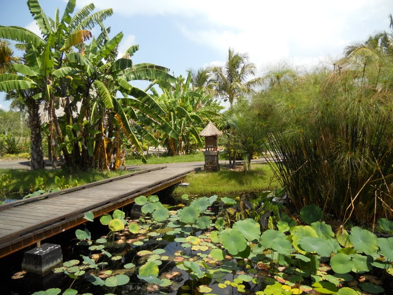 Naples Florida Botanical Gardens Sidewalk Safari
