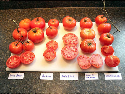 Here are five more varieties. There were definitely differences in texture, size, shape and the number of seeds.