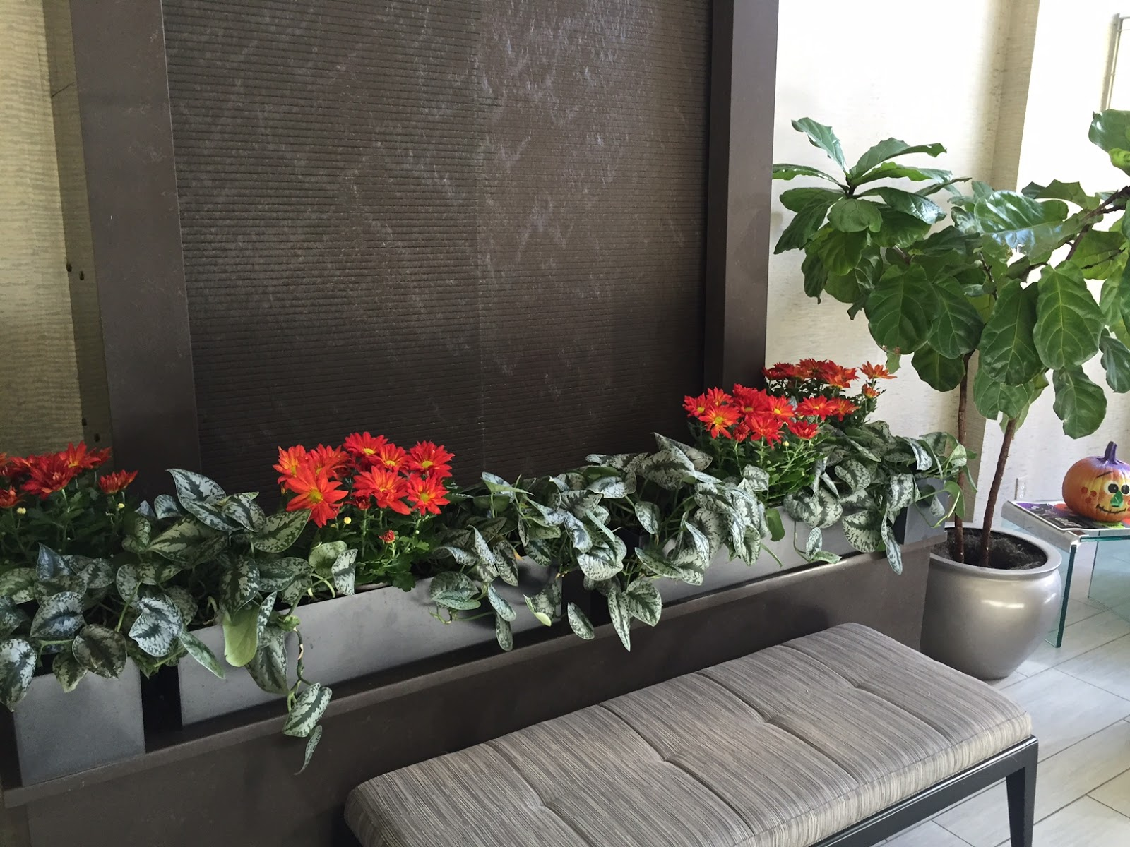 Acton Ma Tropical Plant Care Anf Flowers; Acton Mainterior Landscape Design;