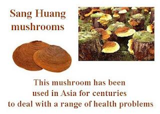 Sang Huang mushrooms
