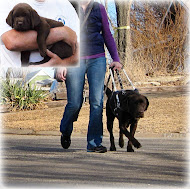 Puppy to Guide Dog: