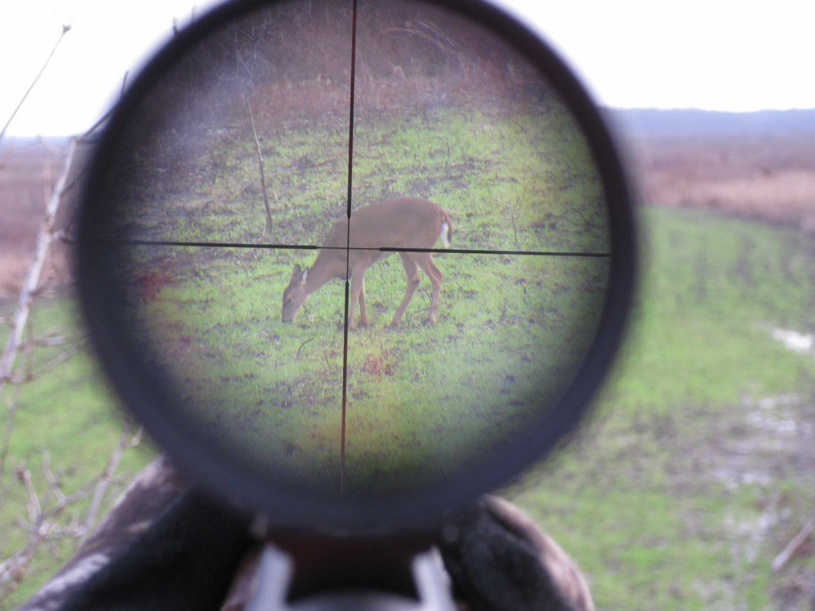 Displaying 20> Images For - Funny Deer Bow Hunting Pictures