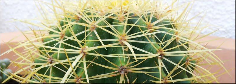 Mis Kaktus