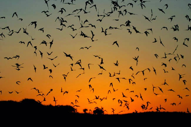 bats are our freind and highly beneficial for insect control