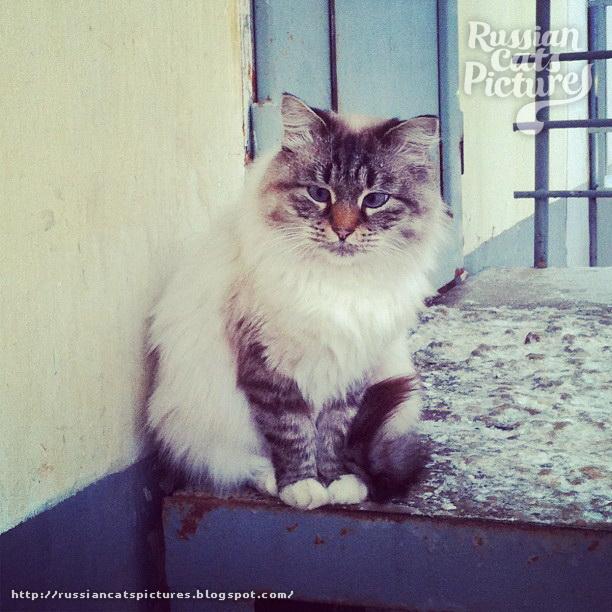 Sad Instacats Cat 11
