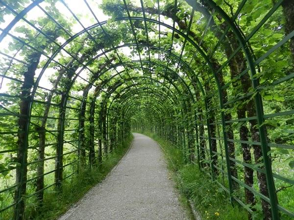 tunel-verde-poza-germania
