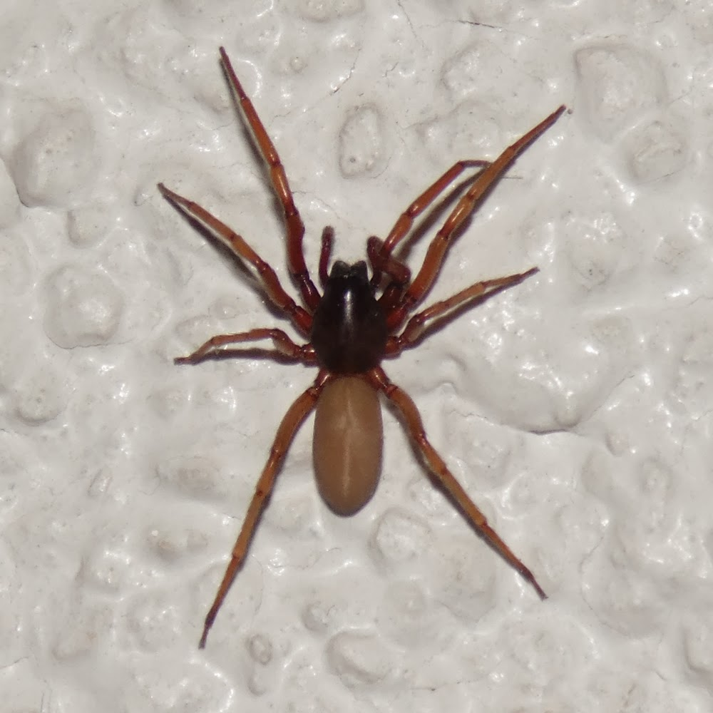 das blog does germany have any poisonous spiders yes